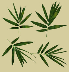 bamboo leaf set vector image vector image