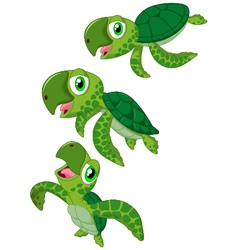 Cartoon sea turtle vector image vector image