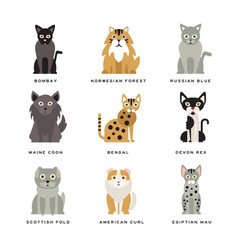 Flat domestic breeds of cats vector