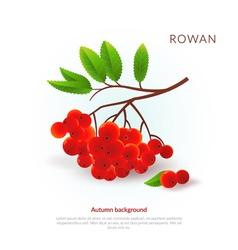 Rowan Autumn background vector image vector image