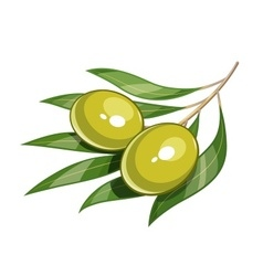 Pair of green olive vector