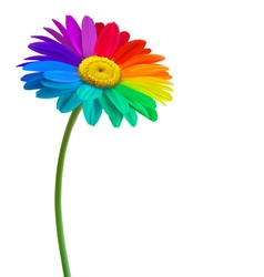 Rainbow daisy flower background vector
