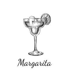 Hand drawn sketch margarita cocktail drinks vector