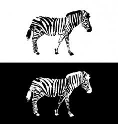 zebra design vector image