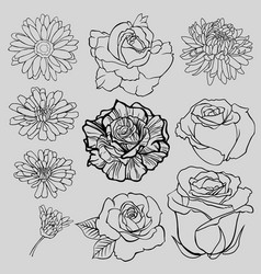 set of isolated lined flower sketches vector image vector image