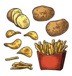 French fry stick potato in paper box and chips vector