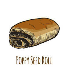 Poppy seed roll sweet bun vector