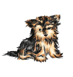 Yorkshire terrier puppy vector