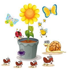 plant and insects vector image