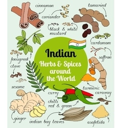 Indian herbs and spices vector