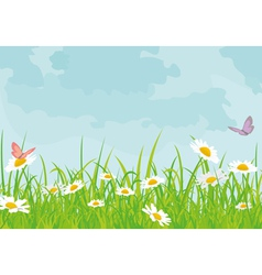 Daisy field vector