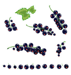 black currant set vector image vector image
