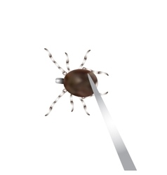 Remove mite with special tools vector