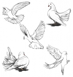 Doves silhouette vector