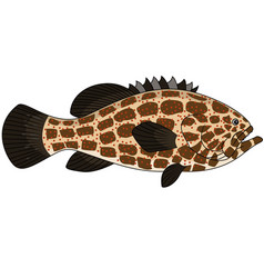Grouper fish vector