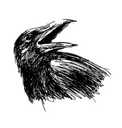 Hand sketch head crow vector