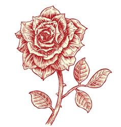 Vintage rose vector