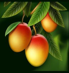 Mango on branch vector