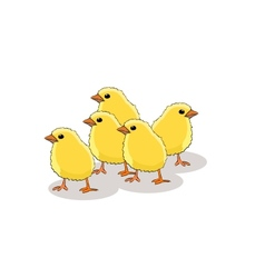chicken on a white background vector image vector image
