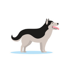 siberian husky dog side view vector image