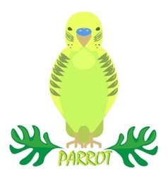 Parrot isolated front view on white Green bird vector image