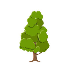 Oak tree isolated on white vector