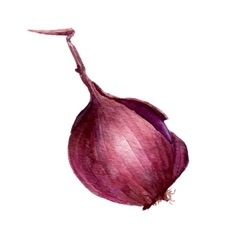 Watercolor purple onion bulb vector