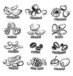 Nuts icon set vector