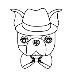 cute french bulldog male with hipster accessory vector image