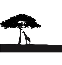 Giraffe silhouette background vector image vector image