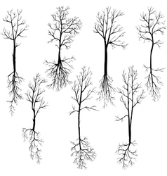 Set of different winter trees and roots vector