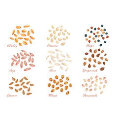 realistic cereal grains and oil seeds set vector image