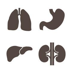 Human organs silhouettes vector