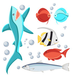 Cartoon style fish and water bubbles shark vector