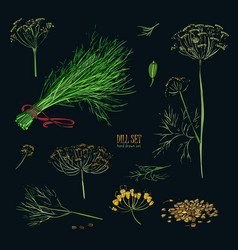 dill set hand drawn colorful collection with vector image vector image