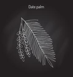 Date palm phoenix dactylifera vector