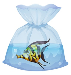 A fish inside the plastic container vector