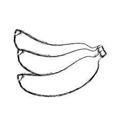 delicious bananas fruit vector image