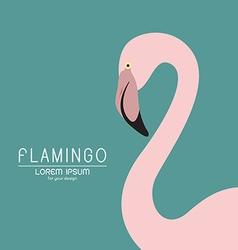 Flamingo design vector
