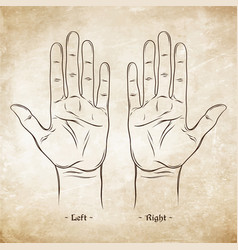palmistry or chiromancy chart blank template vector image