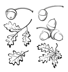 Oak leaves and acorns pictograms vector