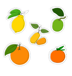 color sticker set of citrus fruit lemon vector image vector image