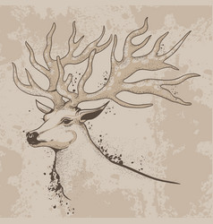 sketch of a deer head with antlers vector image