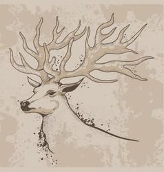 Sketch of a deer head with antlers vector