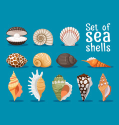 sea shells flat icons set vector image