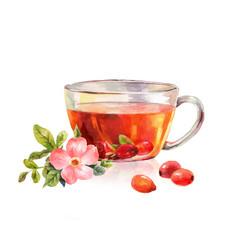 glass mug of herbal tea drink rosehip tea vector image