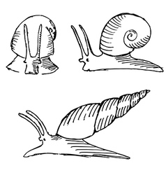 snail set vector image vector image