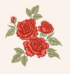 red rose flowers and leaves in vintage style hand vector image