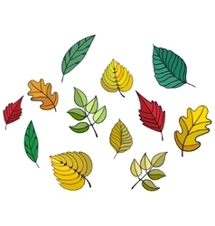 Different leaves vector