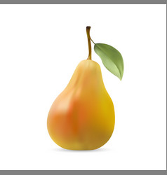 Realistic of pear with leaf vector